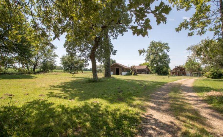 Maison landaise avec 3,6 hectares 2